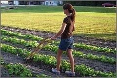 garden push cultivator