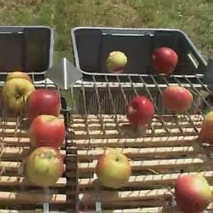 apple ground gatherer mechanism