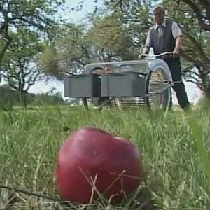 fallen apple harvester
