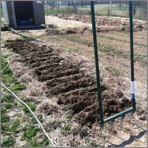 Broad fork aerating a long garden bed