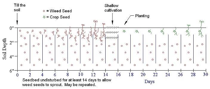 False seed bed weed control method