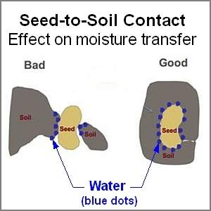 Difference between good and bad seed to soil contact