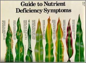 corn nutrient deficiency guide