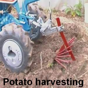 Potato Planting Harvesting Russian Style Gardens