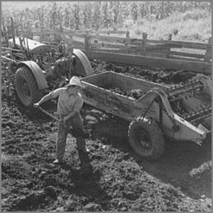 scooping manure into a spreader
