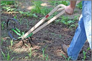 Push plow being used in the garden