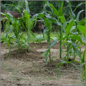Small mound planting method