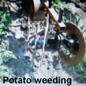 spiked discs for weeding potato ridges
