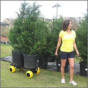 yard cart hauling two large potted bushes